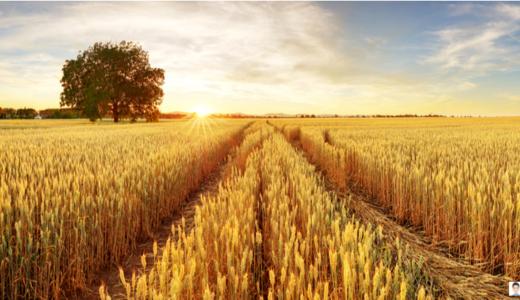 ライ麦畑の反逆児 ひとりぼっちのサリンジャー ~ 仕事が祈りになる体験