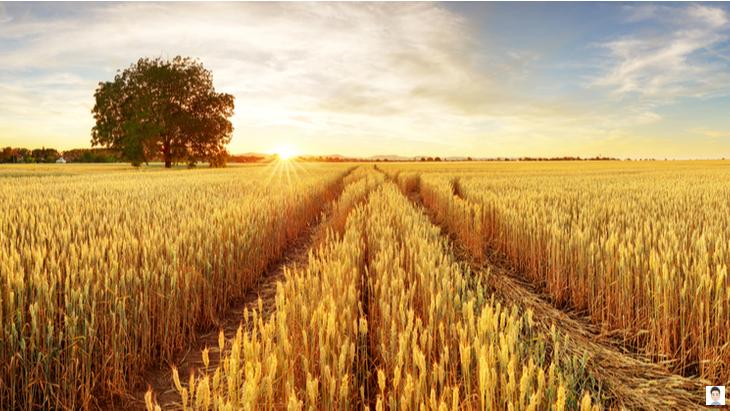 ライ麦畑の反逆児 ひとりぼっちのサリンジャー